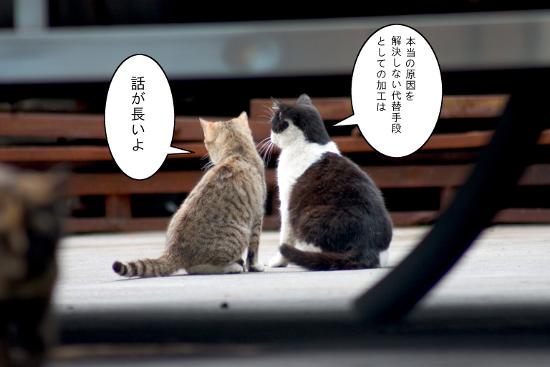仕立てのウンチクたれる猫