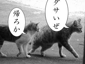 嘲笑する猫々
