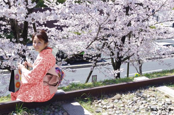 桜とピンクの着物