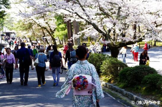 桜見シーズンの南禅寺へ