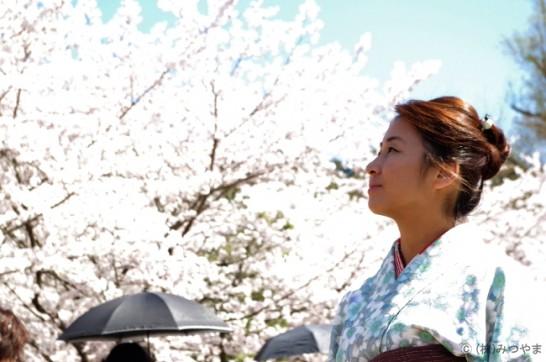 南禅寺鉄道跡の桜・ローアングル