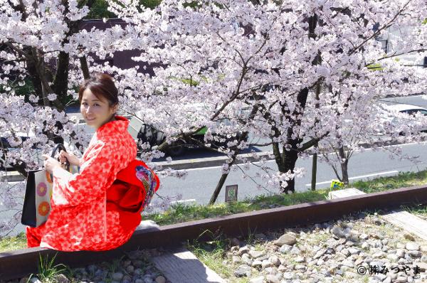 桜と赤の着物
