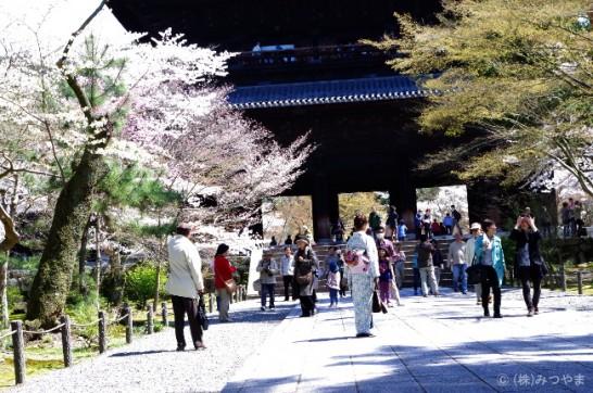 桜の見どころ・観光で賑わう南禅寺
