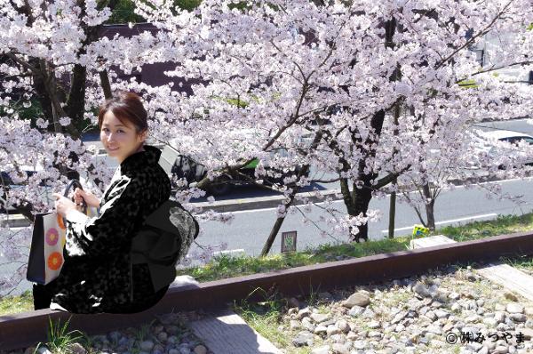 桜と黒の着物