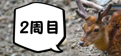 2周目・鹿