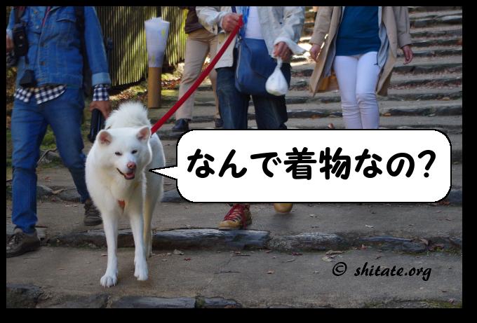 神護寺の犬