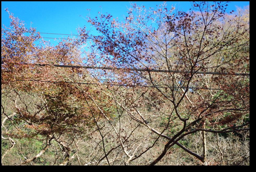 高山寺~神護寺の紅葉終了の図