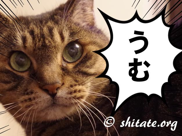 同意する猫