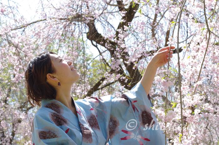 しだれ桜と浴衣女子のポートレート写真