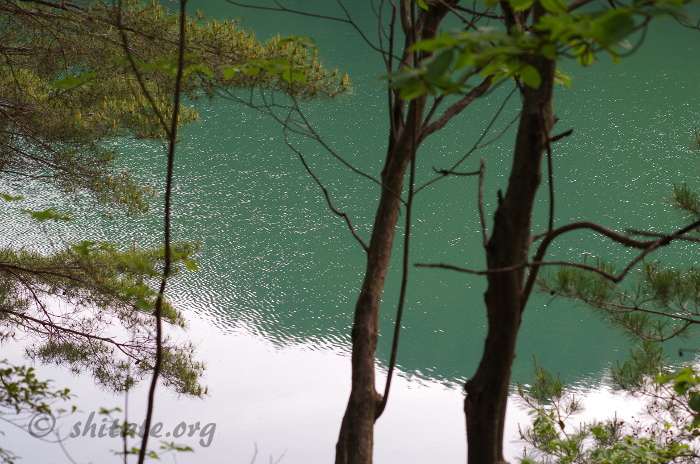 沢ノ池の写真・風で波立つ水面