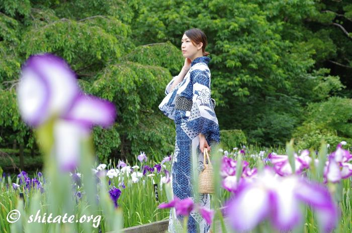 紺の浴衣と菖蒲