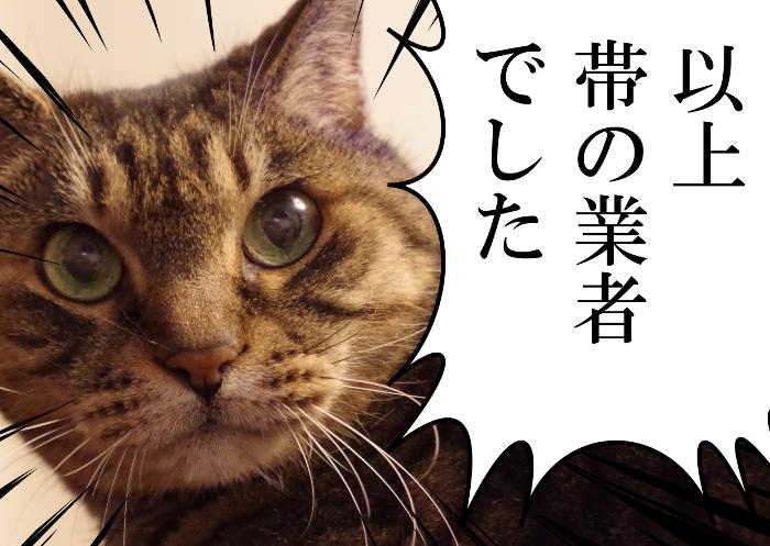 帯の通販猫
