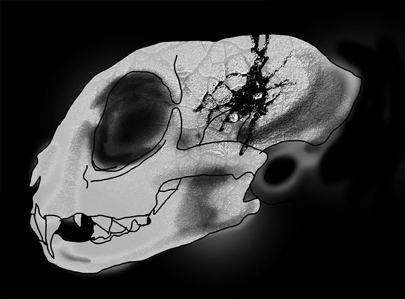 ニャーロスの頭蓋骨